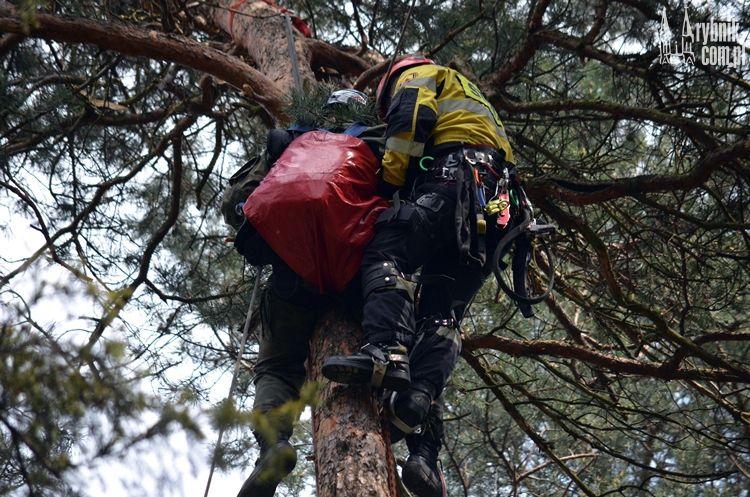 Rybnik: młody spadochroniarz utknął na drzewie (wideo)