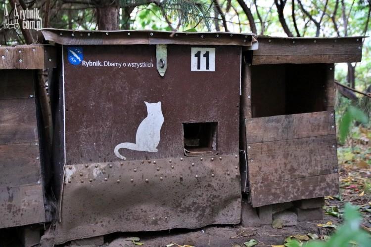 Komu przeszkadzają zwierzęta na Smolnej? Padają koty, psy dostają krwotoku