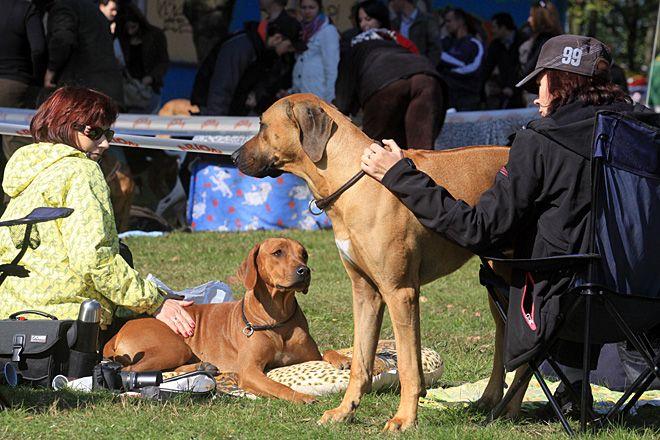 W Jastrzębiu może powstać specjalny wybieg dla psów, archiwum