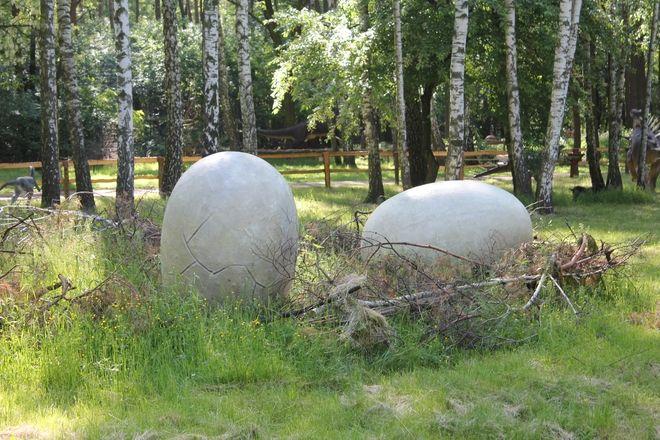 Eksponaty Dino Parku rozmieszczone są w Kamieniu na dużo większej przestrzeni niż w Stodołach.