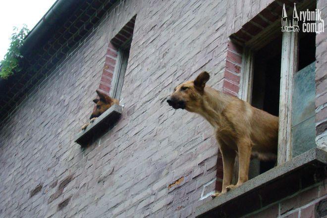Nielegalna hodowla psów w Świerklanach