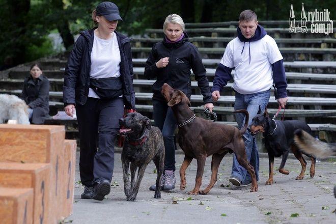 Utrudnienia w ruchu związane są z wystawą psów