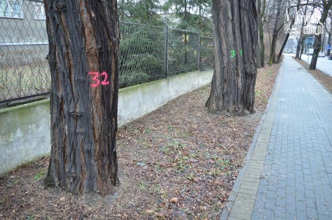 Drzewa zostały ponumerowane m.in. na ul. Gliwickiej
