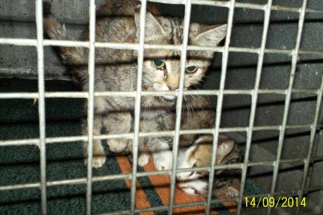 Zdaniem wolontariuszki leżący w klatce kot był martwy