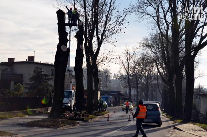 Wycinka drzew na Boguszowickiej jest kontynuowana po latach