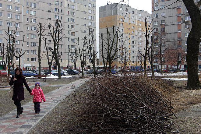 Zdjęcie drzewostanu na osiedlu sprzed kilkunastu dni