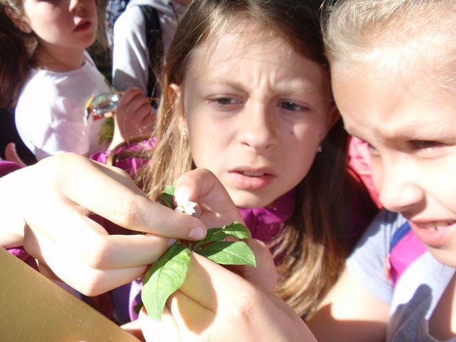 Dzieci podczas warsztatów uczyły się rozpoznawać leśne rośliny