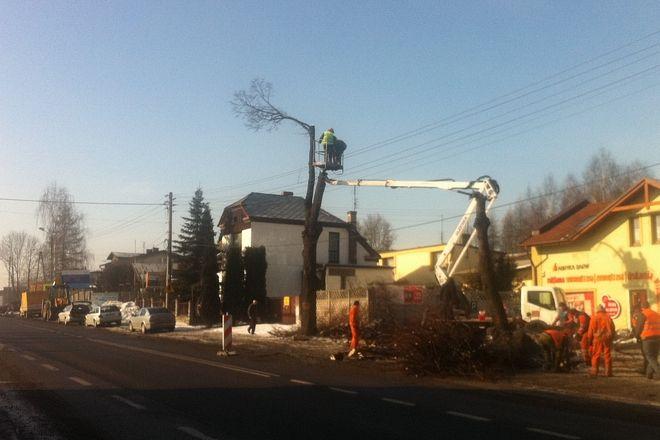 Wczoraj trwała wycinka drzew na wysokości salony skody