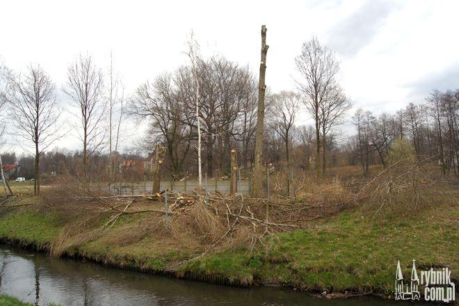 Prace budowlane jeszcze się nie rozpoczęły, ale służby miejskie dokonały już wycinki drzew