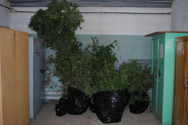 CBŚ wpadło do domu w Czyżowicach. Rosło tam 300 drzewek marihuany!, archiwum