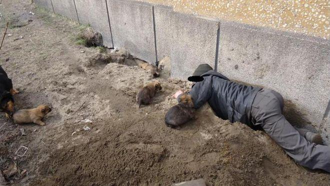 Suka ukryła szczeniaki w ziemi, by nie zamarzły