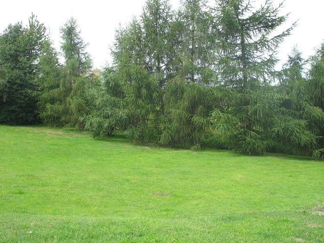 Jesienią będzie można kupić od miasta wiele atrakcyjnych działek.
